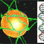 Спираль ДНК. Лестница ведущая в небо