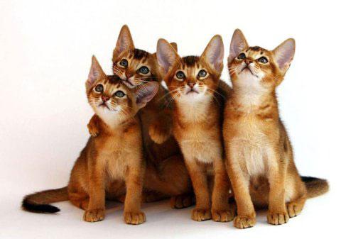 Ris_5_Cats_480_337_72_W